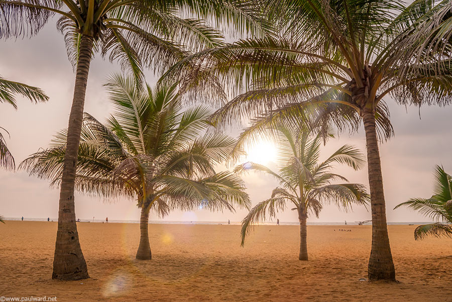 beach palm trees in Sri Lanka by Birmingham travel photographer Paul Ward