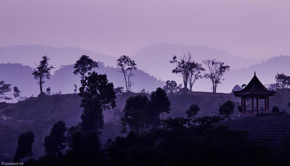 Thailand tea farm landscape photography by Travel Photographer Paul Ward