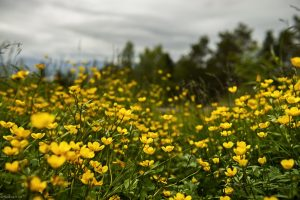 flowers, Norway, landscape photography by Travel Photographer Paul Ward