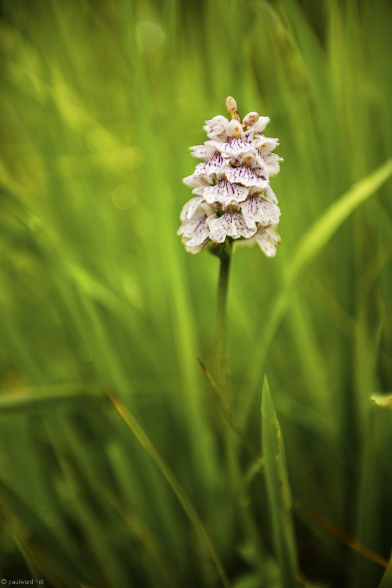 Orchid, Norway, landscape photography by Travel Photographer Paul Ward